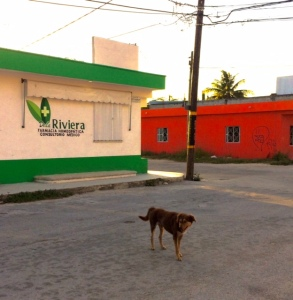 Dogs of Mexico